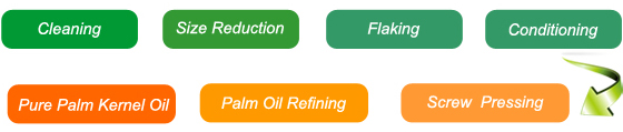 palm kernel oil extraction process